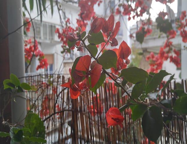 Νοέμβρης μετά την βροχή