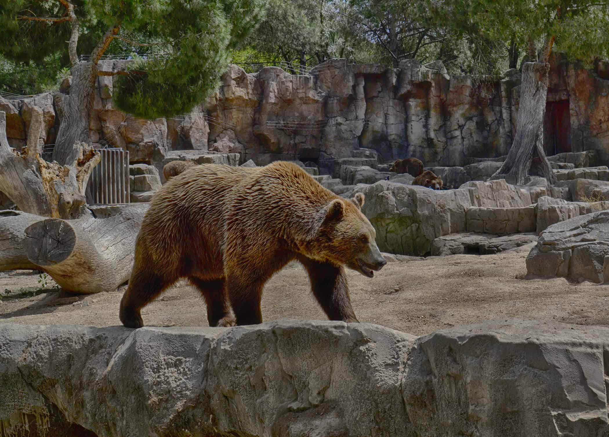 Ζωολογικός κήπος της Μαδρίτης