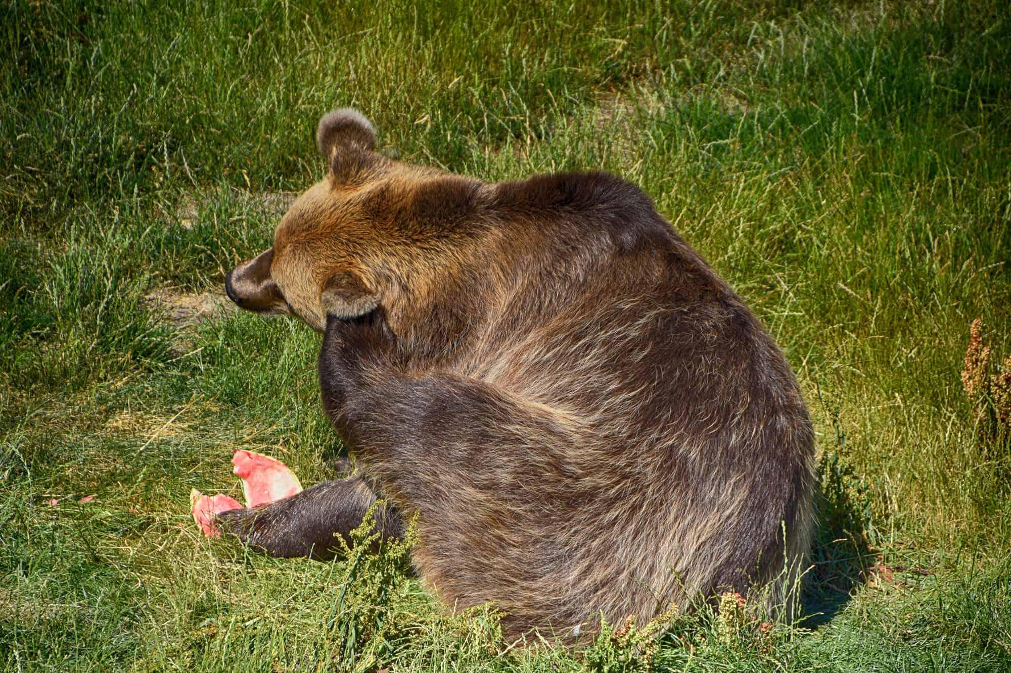 Ο ζωολογικός κήπος του Ελσίνκι-Αρκούδα