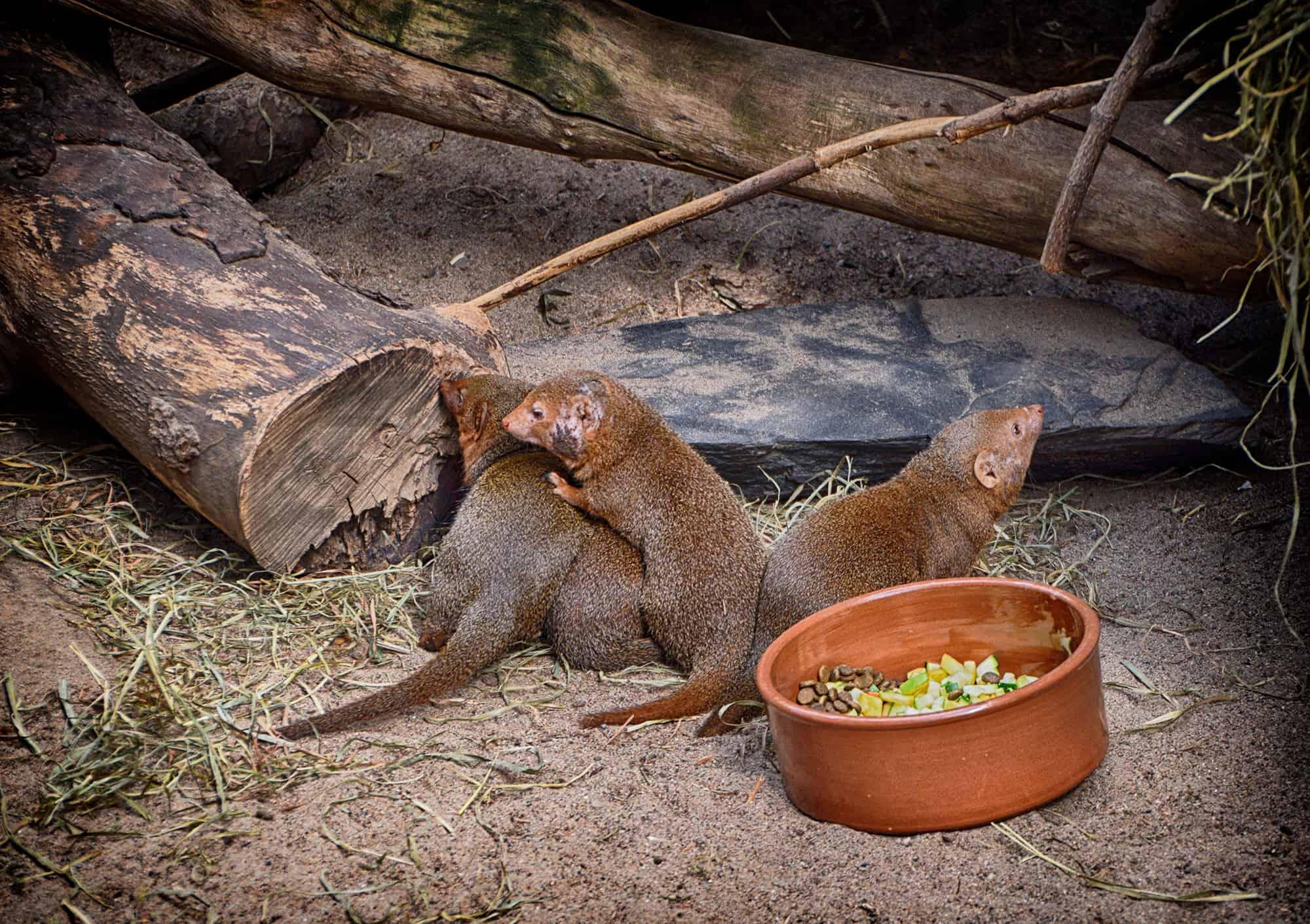 Ζωολογικός κήπος στο Ελσίνκι