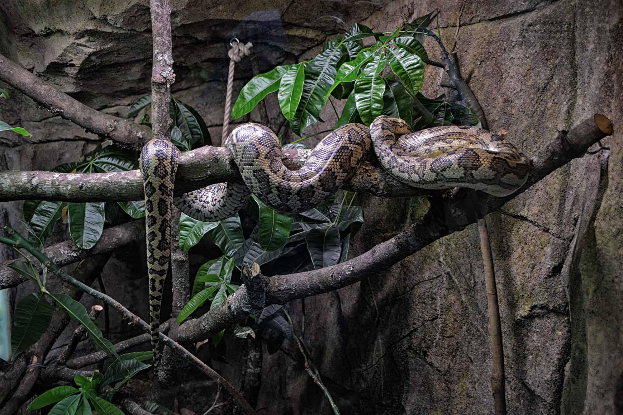 Στον ζωολογικό κήπο τους Ελσίνκι