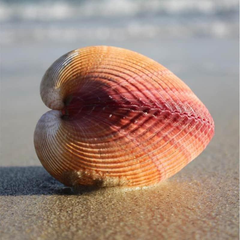 Κοχύλια της θάλασσας