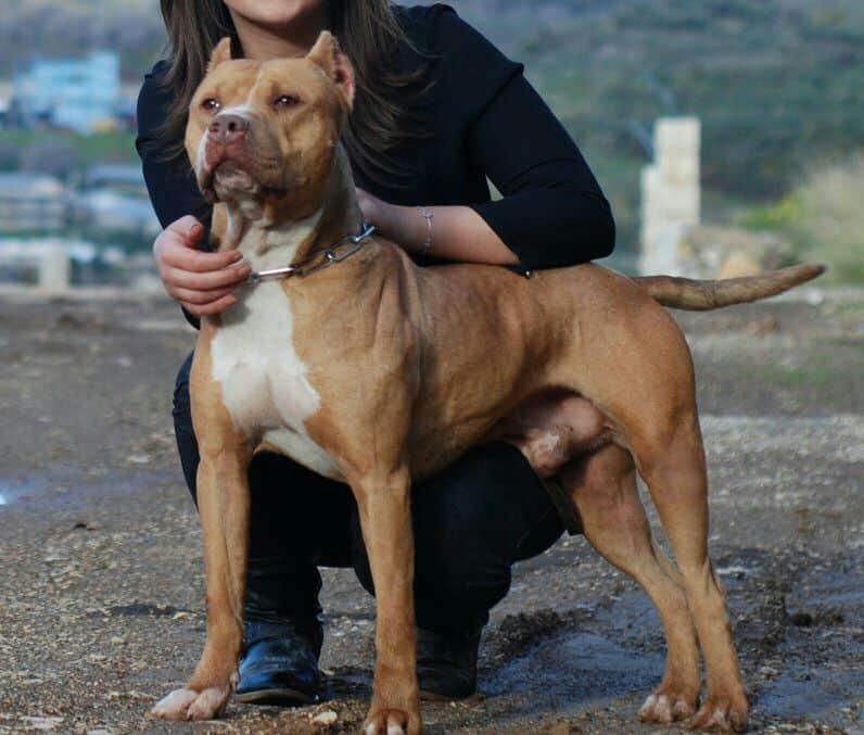 Οι πιο επικίνδυνες ράτσες σκύλων