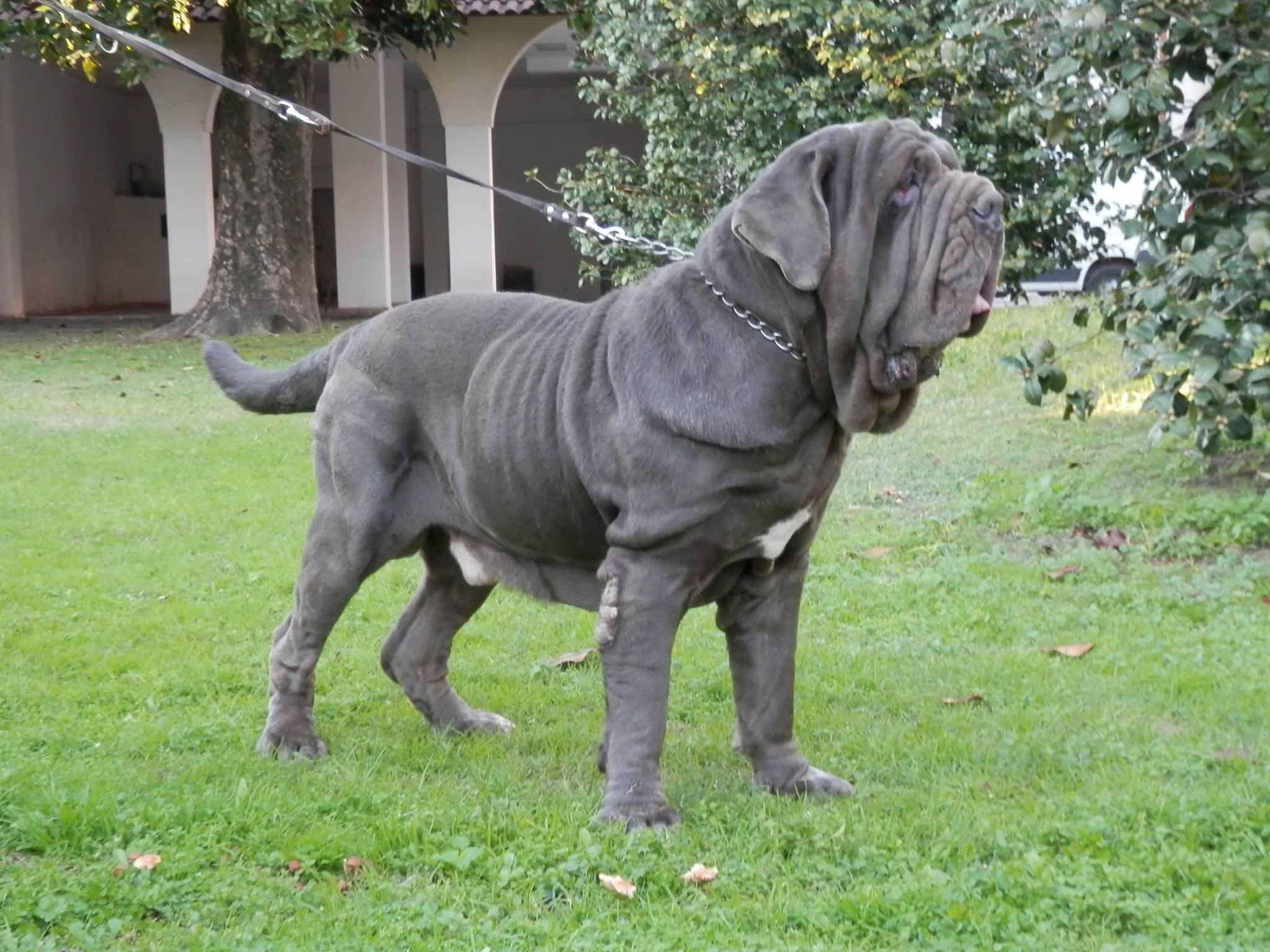 Τα πιο επιθετικά σκυλιά