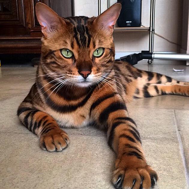 οι πιο όμορφες γάτες