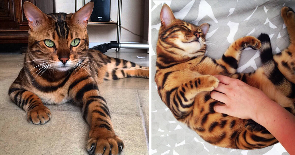 Οι πιο όμορφες γάτες του κόσμου