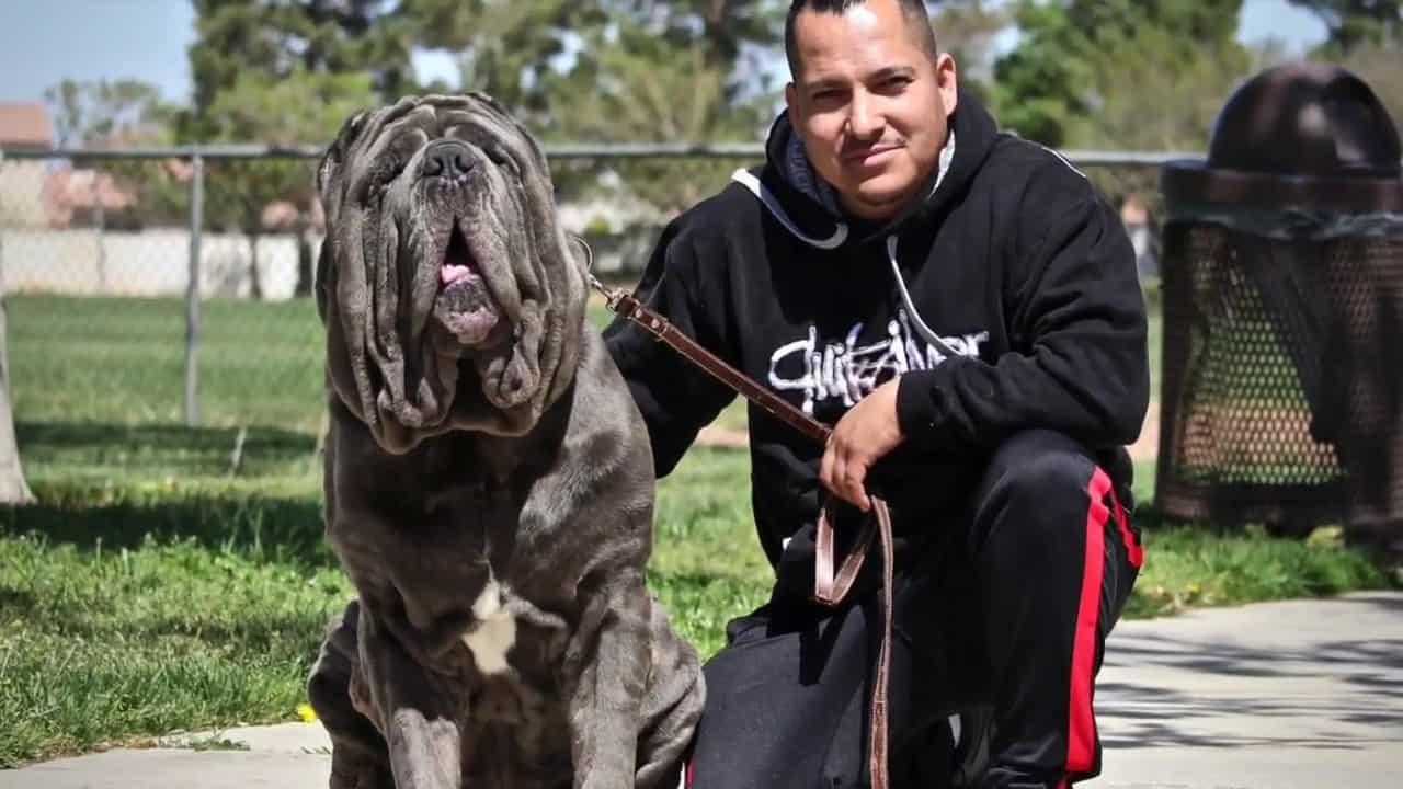 Οι πιο μεγαλόσωμες ράτσες σκύλων