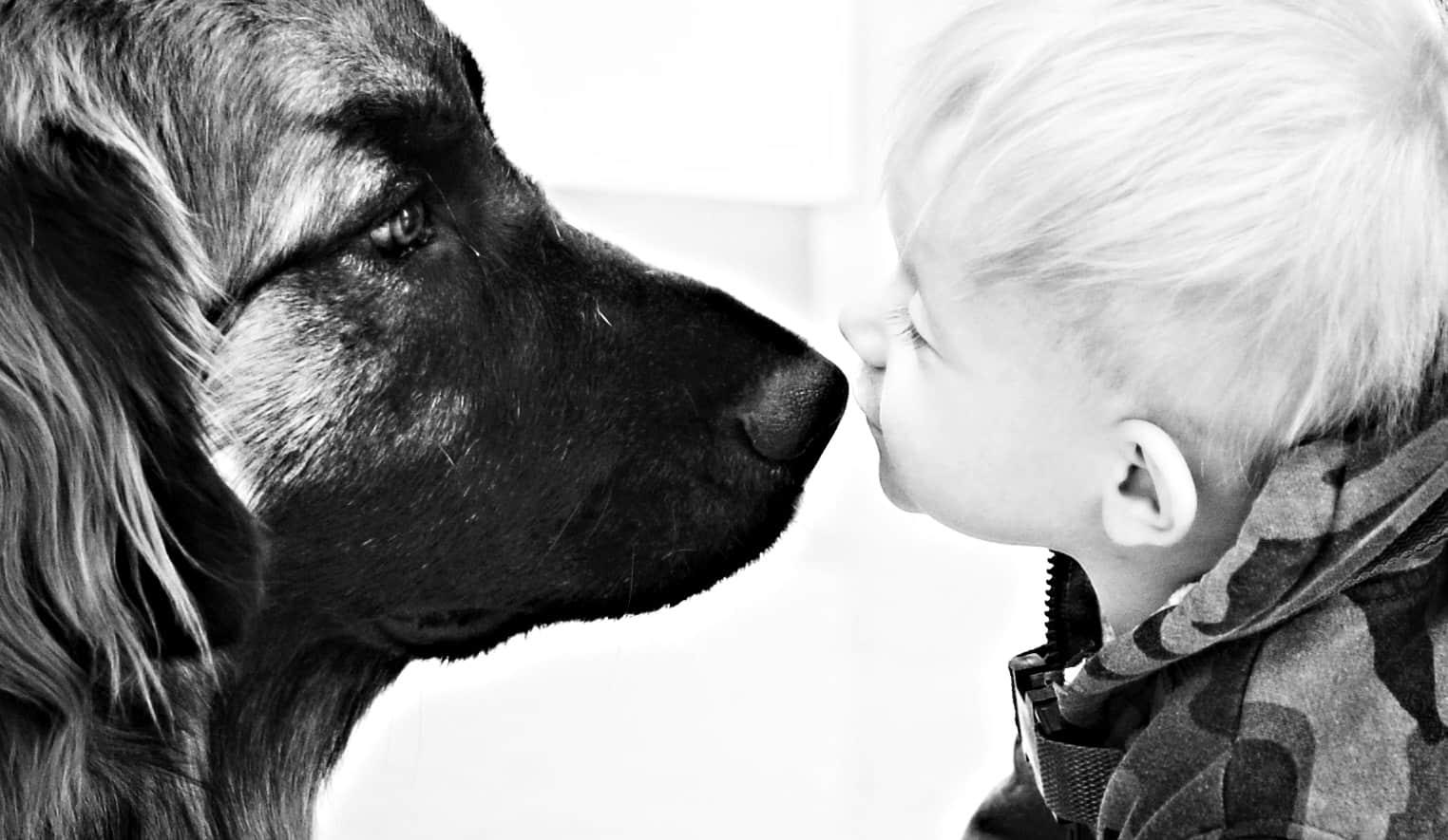 Ποιο είναι το καλύτερο σκυλί για οικογένεια;