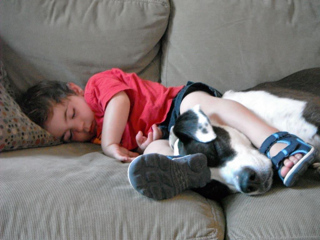 τα καλύτερα σκυλιά για οικογένεια