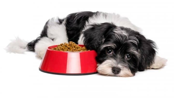 γαστρεντερίτιδα σκύλου
