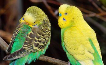 Πόσο ζουν τα παπαγαλάκια