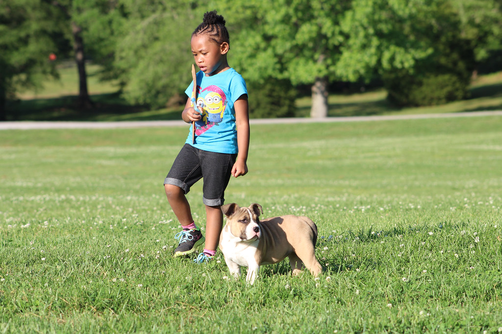 Το Αμερικανικό Μπούλι είναι ένα κατάλληλο σκυλί για παιδιά